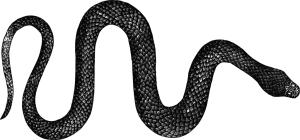 Imagem XII