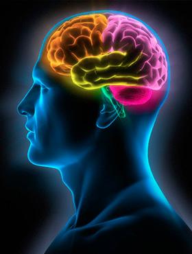 neuropscologia